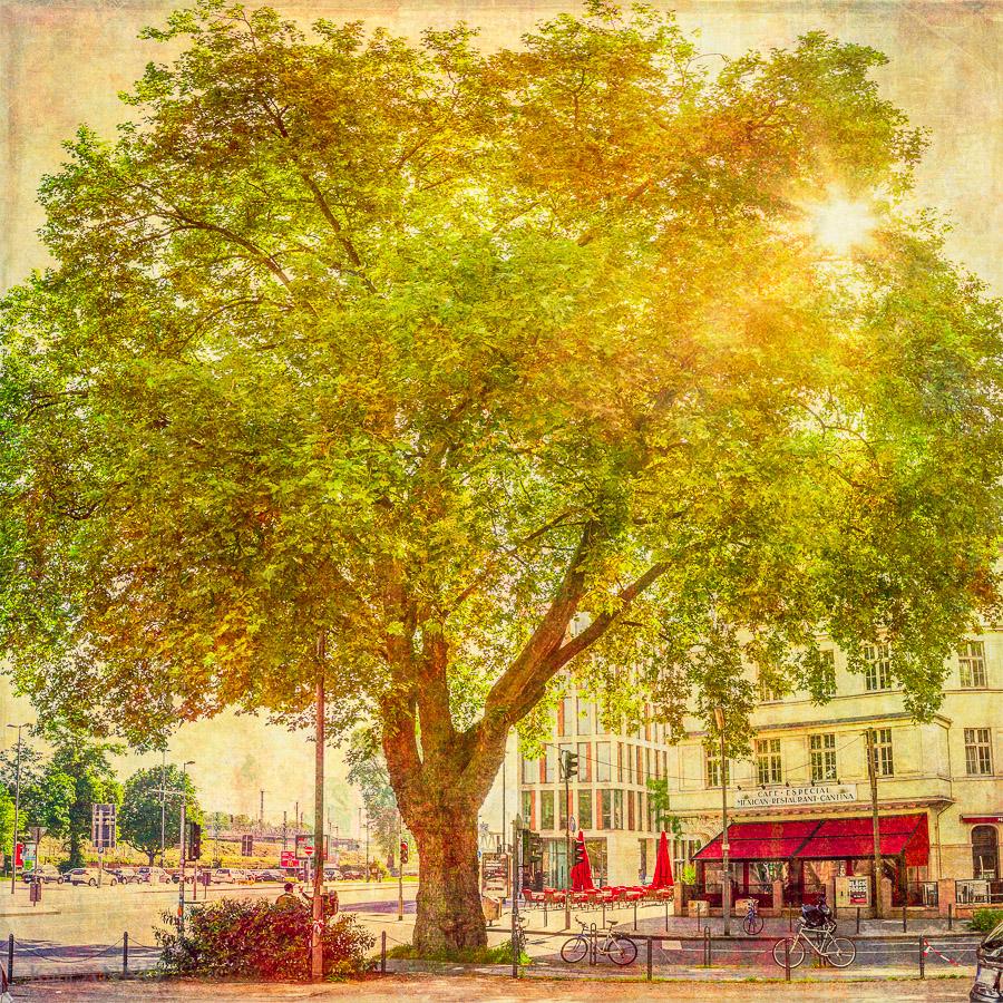 Deutzer Baum gegenüber dem Deutzer Bahnhof