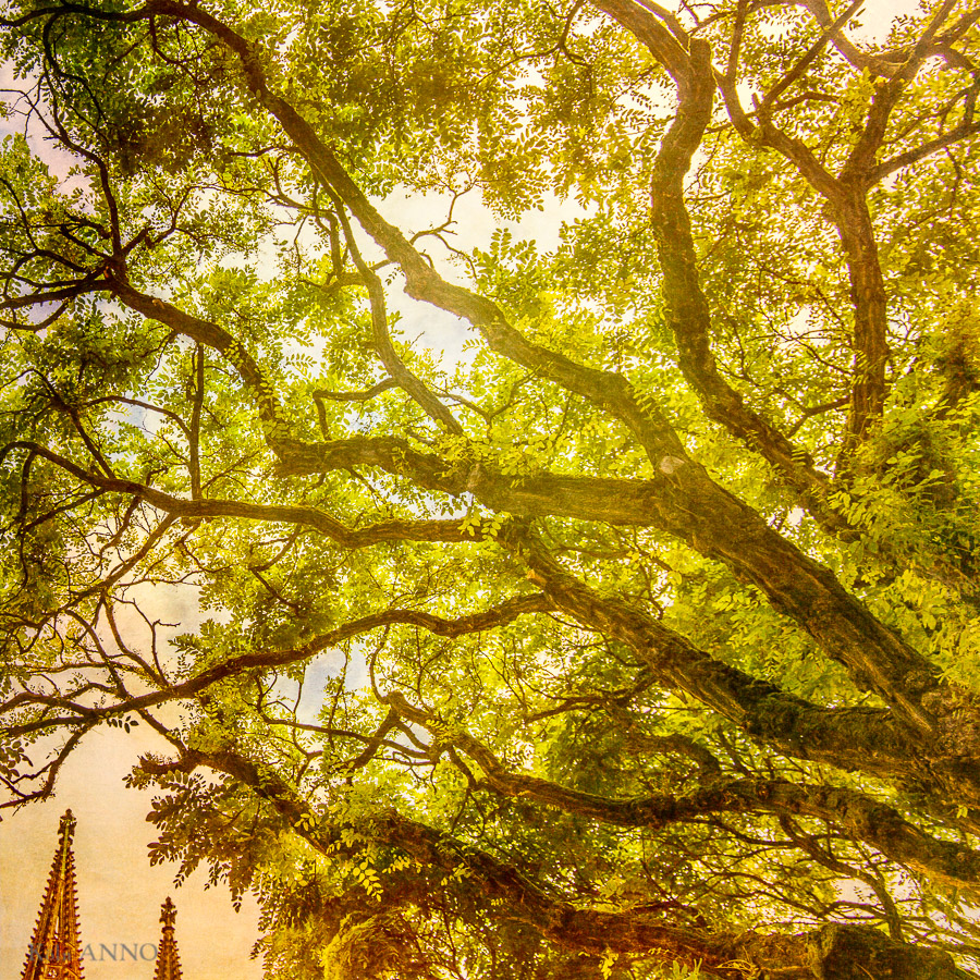 Natur und Kirche