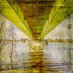 Zoobrücke bei Hochwasser, Brücke, Baum