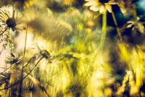 Blüten ohne Insekten