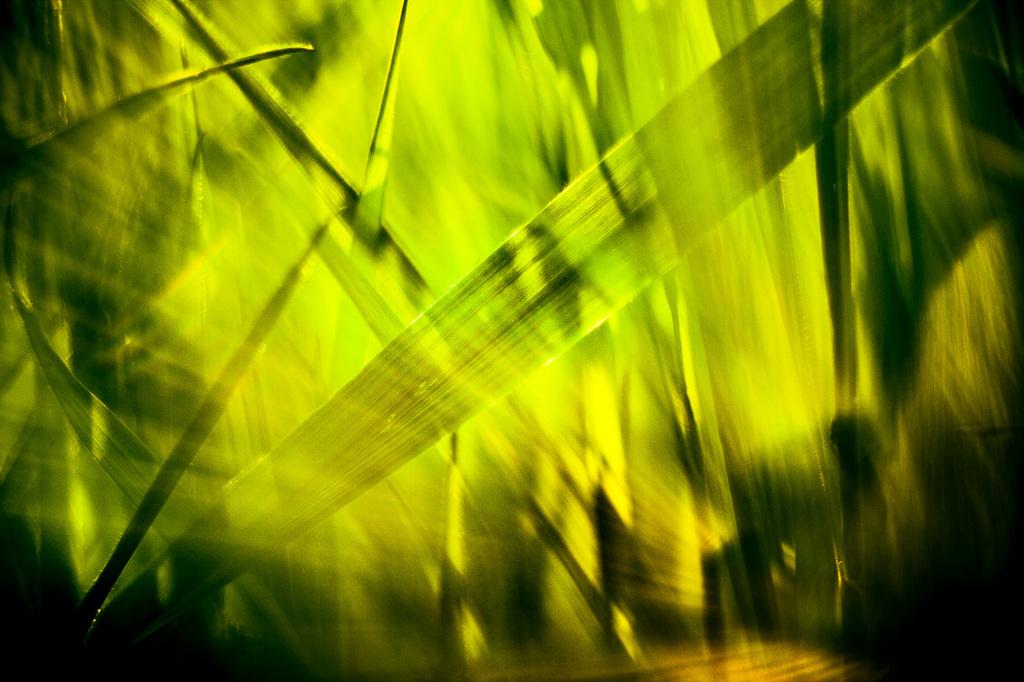 Selbstbestäubende Pflanzen II Aufnahmejahr 2055 - Der Anbau windblütiger Pflanzen als neue Nahrungsmittel bereichert unseren Speiseplan.